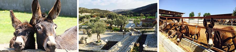 Ослиная ферма